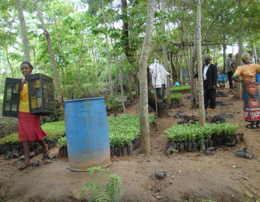 Farmers carrying away their new tree seedlings