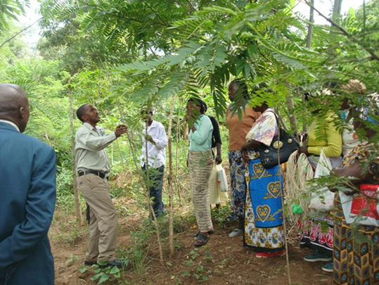 Nicholas Syano's Tree Care and Management Training