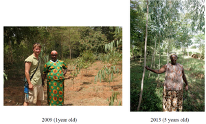 Example Tree Growth In Last Four Years: 2009-2013