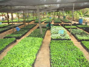 DNRC tree Nursery