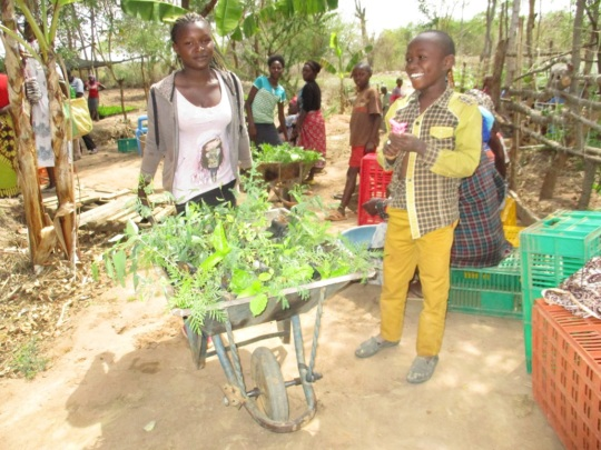 farmers picking tree seedlings