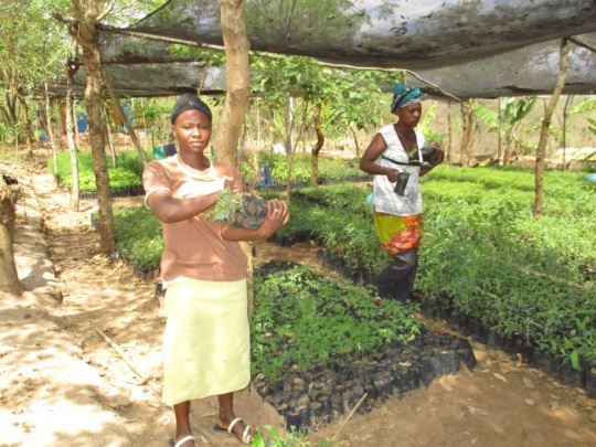 more farmers picking tree seedlings 1