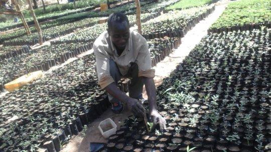 DNRC staff propagating more trees
