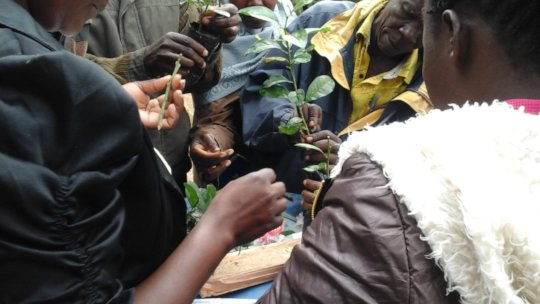 farmers learning about tree grafting