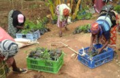 Forestry training & finance for 300 farms in Kenya