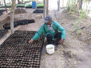 sowing tree seeds