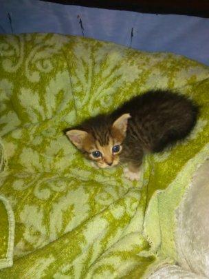 Helpless Kitten
