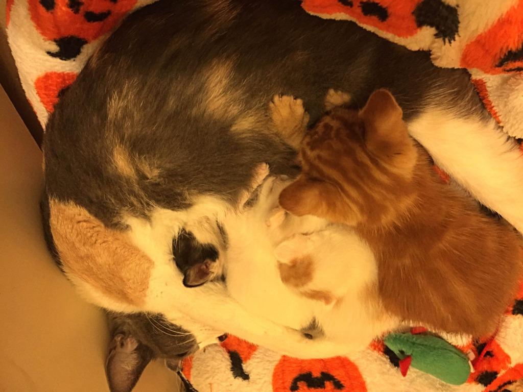 Mothering her kittens