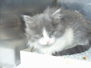 Tess at animal shelter prior to being rescued