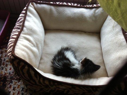 Tiny little kitten named Guppy
