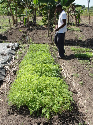 Overseeing seedling production in Lory