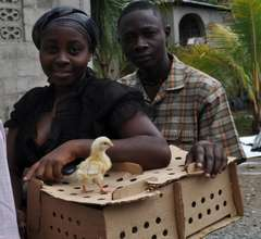 raising chickens to improve nutrition