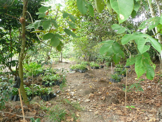 The Sedahan reforestation site