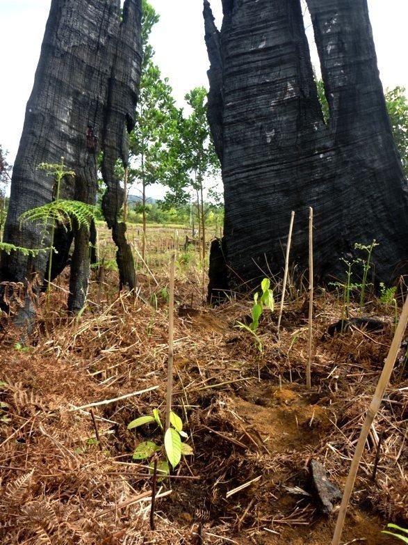 Seedlings take root (photo by Kari Malen)