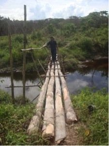 Bridge - intended for people, used by orangutans!