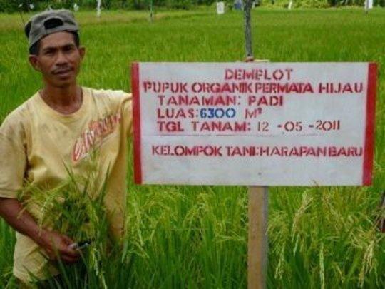 Proud organic rice farmer