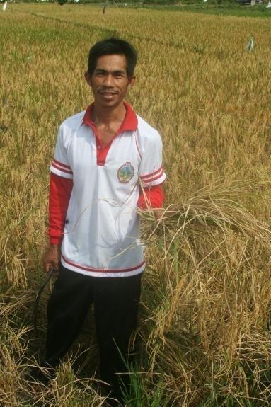 Pak Maknur in his organic rice padi