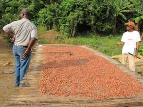 Cocoa beans drying in Monatele