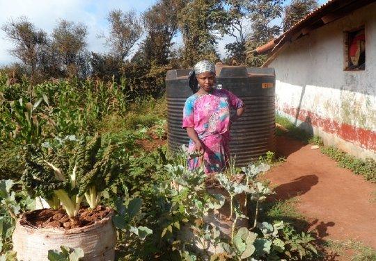 Shamba HODI restoring HOPE for DARMI