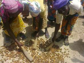 Women crack shea with wooden mallets to dehusk!