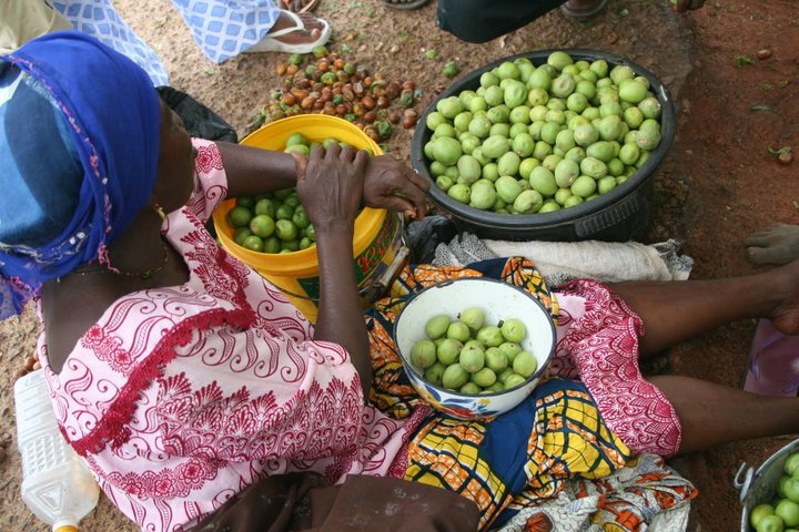 Help 375 Just Shea Women Harvest Safer, Earn More