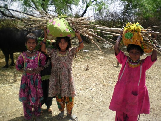 Young Girls picked wood for cooking purposes