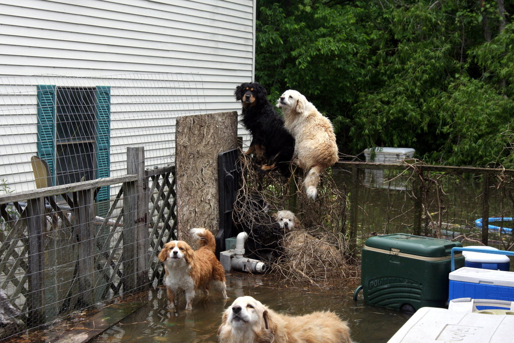 Dogs in Memphis awaiting rescue.