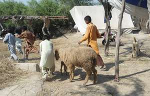 Villagers using their broken houses near matli