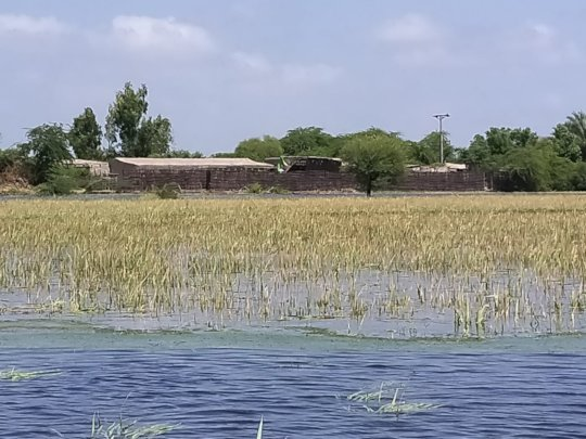 Crops destroy in rain water