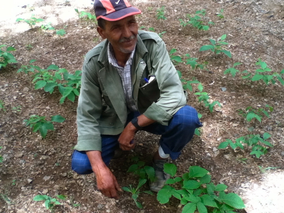 Community member Omar with his saplings.