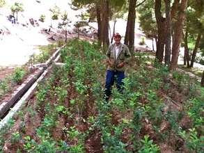 Omar with the year-old cherry saplings.