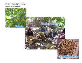 Walnut processing photos (PDF)