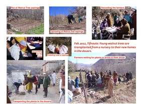 Fruit Tree Distribution Feb 2012 (PDF)