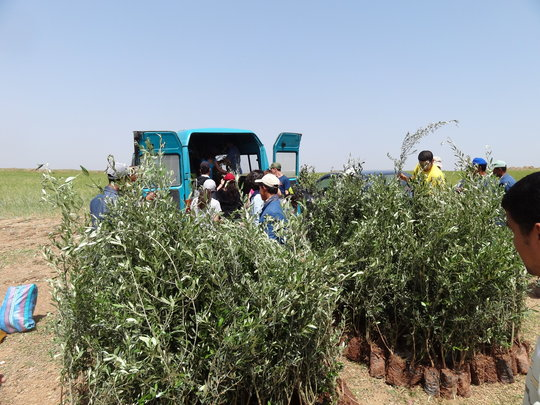 HAF's Olive Tree Distribution in Ben Guerir, 2011