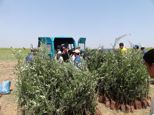 HAF's Olive Tree Distribution in Ben Guerir, 2011