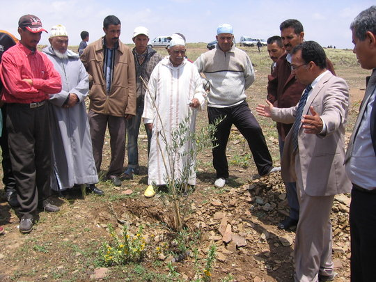 Discussing Effective Capture of Water for Trees