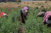 Organic Fruit Tree and Medicinal Herb Nurseries