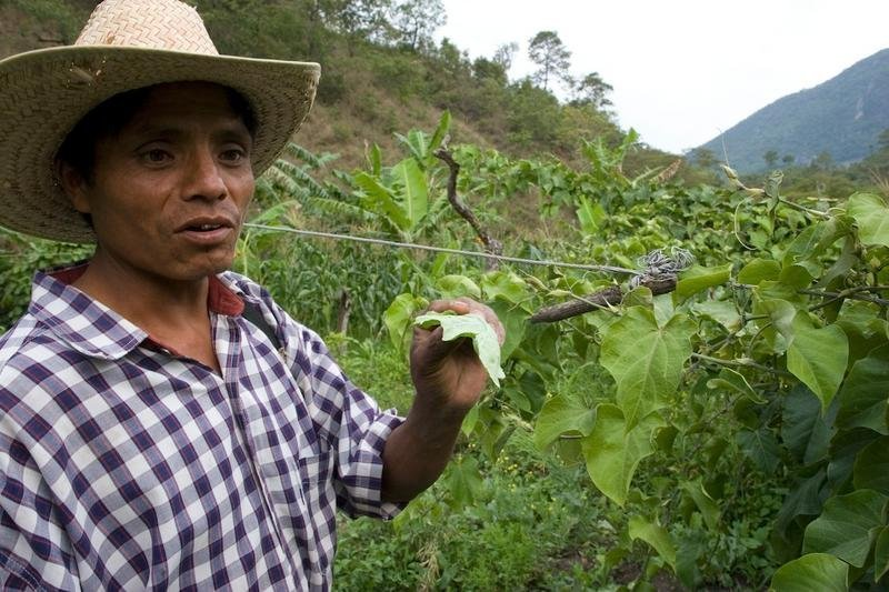 Support Sustainability for Mexican Farmers