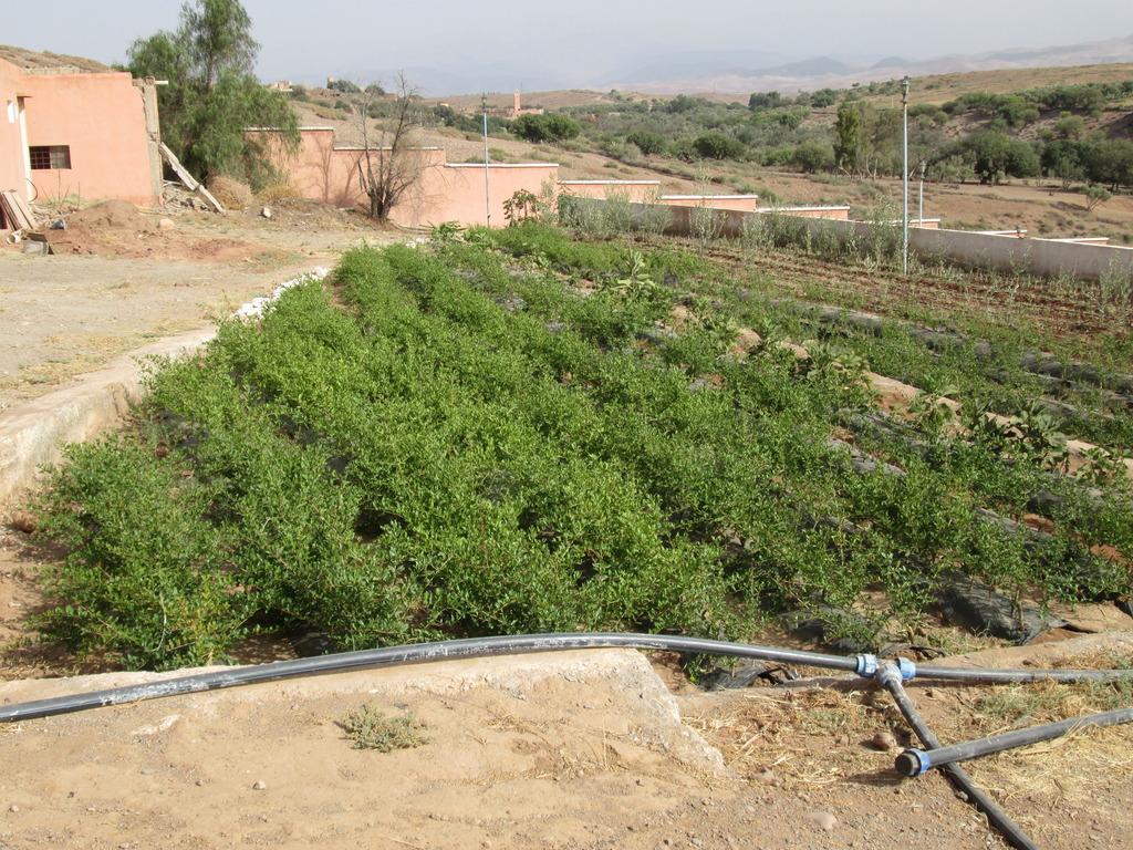 Irrigation of nursery