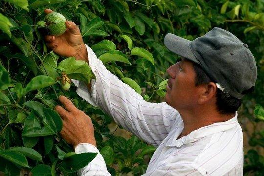 A famer picking his crop