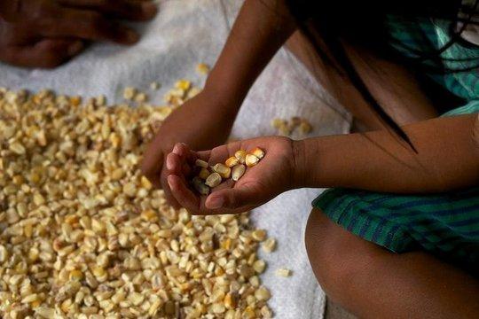 Sorting through corn kernels