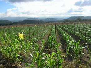 Crop View
