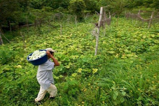 El Salvador Farmer