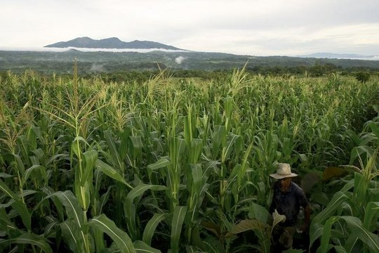 San Diego, El Salvador Agricultural Land