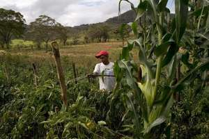 Young Nicaraguan Farmer