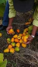 Fresh Nicaraguan Produce