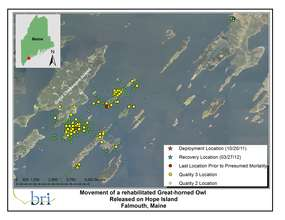 Great Horned Owl's Movements Oct-March