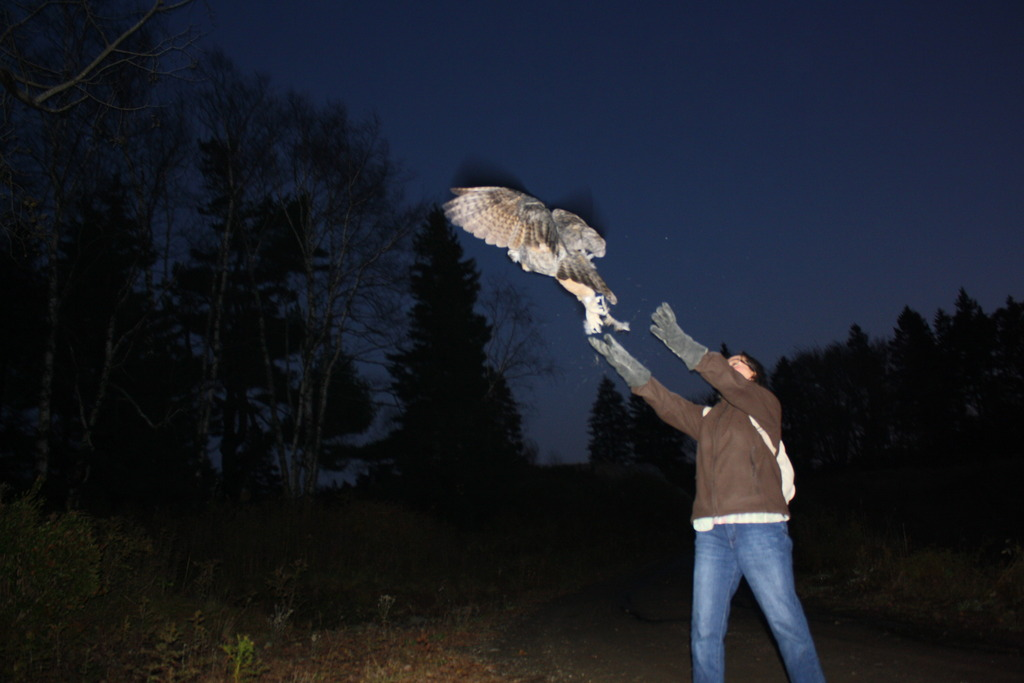 The young owl is released back into the wild!