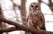 """On the Wings of Research"" Owl Transmitter Project"
