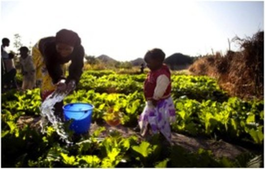 A garden that helps to improve nutrition